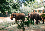 Front view of Mysore Zoo